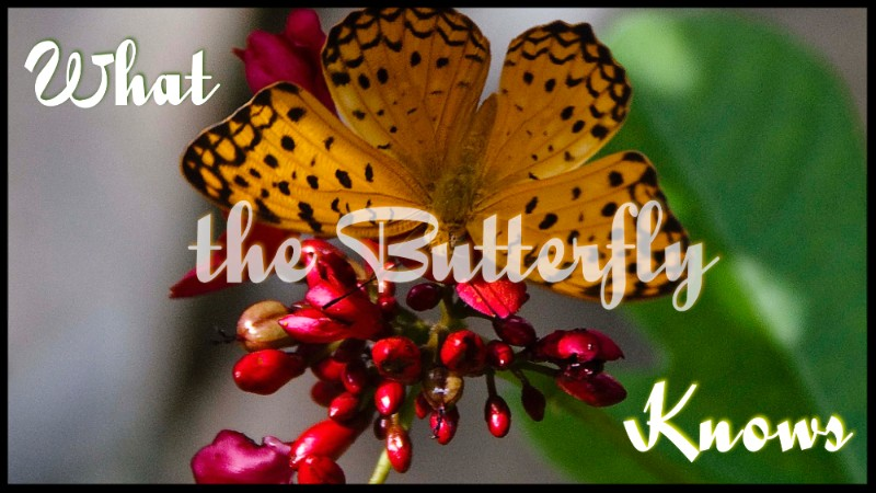 What the Butterfly Knows